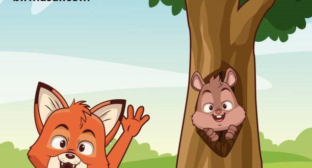 Evcil Sincap ve Komşu Kedi