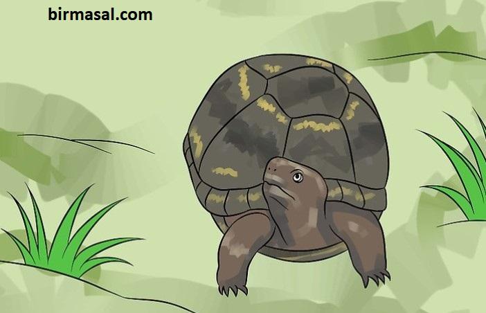 Kaplumbağa Tospik