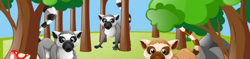 Lemur Ormanı